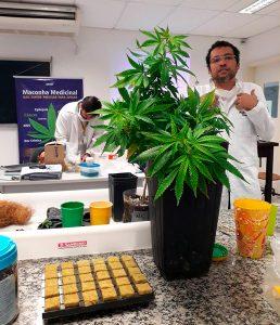 Curso Plantio e oleo Cannabis medicinal da Apepi /UFRJ